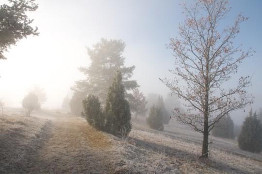 Ist es noch blauer Dunst oder schon geistiger Nebel?
