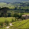 Weinmesse in Strassburg – Unsere Empfehlungen für 2012