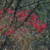Der Herbst bringt's: Mindersbacher Farbsymphonie